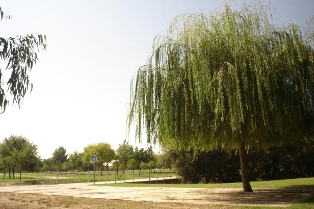 10 rboles con dificultad para adaptarse al clima de for Arboles de hoja perenne para clima mediterraneo
