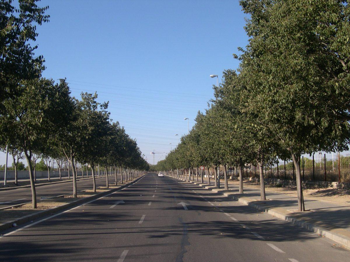 Los 10 árboles Top Ten de hoja caduca en Sevilla