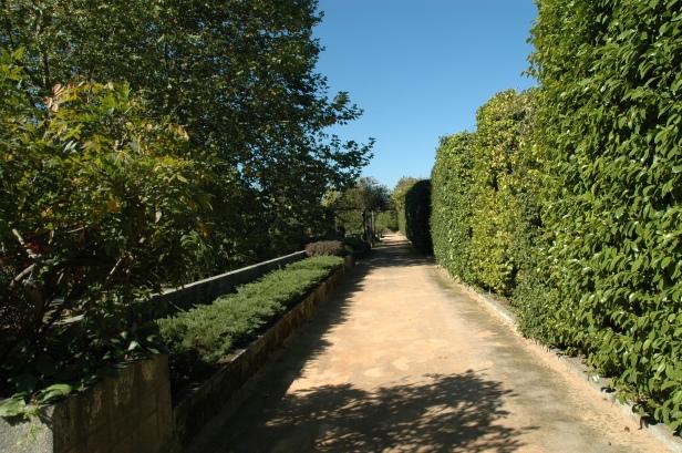 Portugal .-Oporto.-Jardin Botanico.-Setos de Camelias