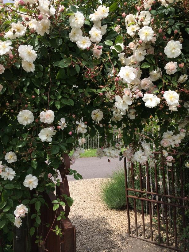 Rose Garden Nursery Filroses –