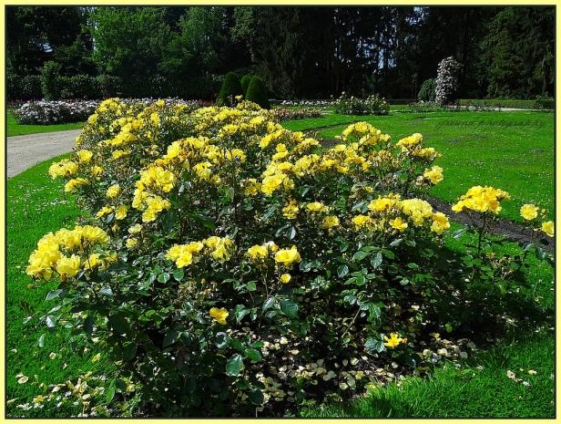Rosegarden in Vrijbroekpark, Mechelen.-b