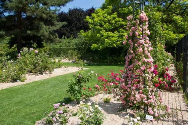 Rosegarden in Vrijbroekpark, MechelenRozenfeesten-in-Provinciaal-Groendomein-Vrijbroekpark-Mechelen