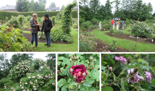 roseraie-daniel-schmitz