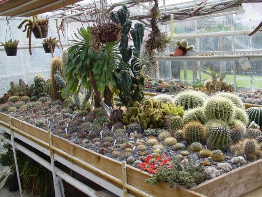 Las plantas cactaceas y suculentas jardines sin fronteras for Cactaceas y suculentas