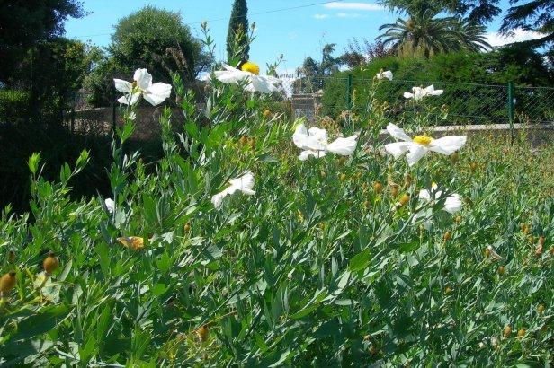 Jardines botanicos franceses jardines sin fronteras for Jardin villa thuret