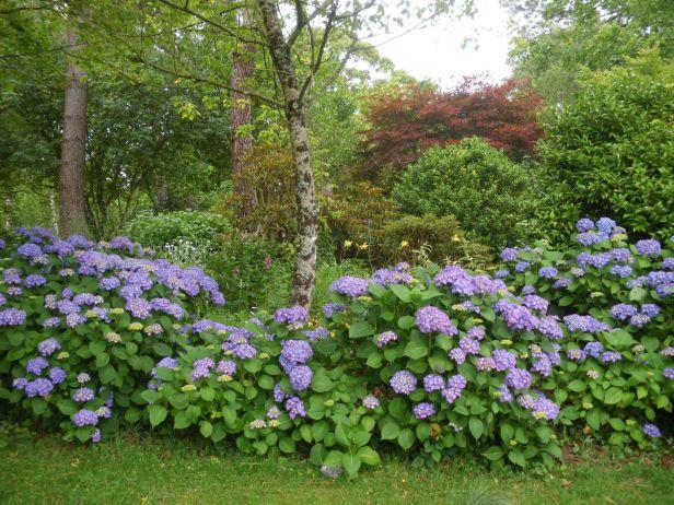 Jardines botanicos franceses jardines sin fronteras - Jardin botanique de cornouaille ...