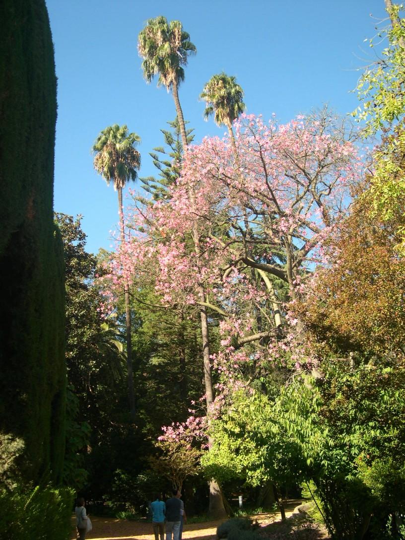 Arboles de floracion oto al en sevilla jardines sin for Arboles de jardin