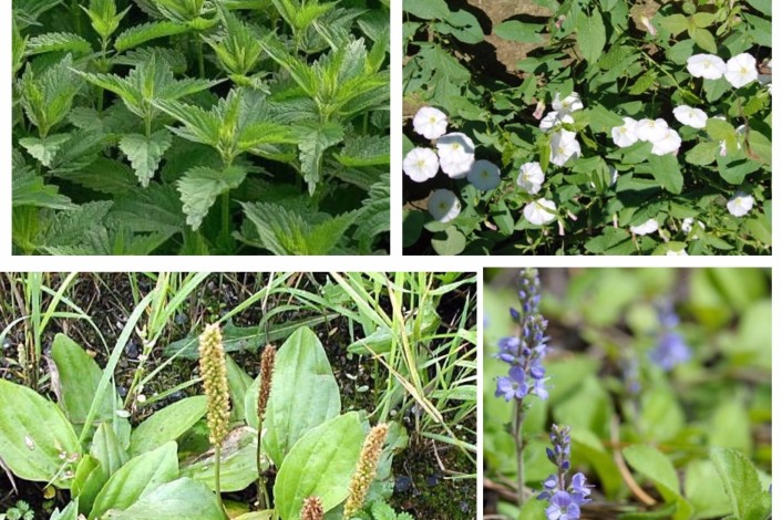Resultado de imagen para Los yuyos o hierbas: Peligros, beneficios y otras yerbas