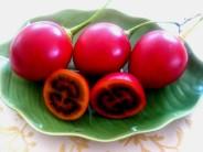 Tomatillo.-Cyphomandra betacea.-k
