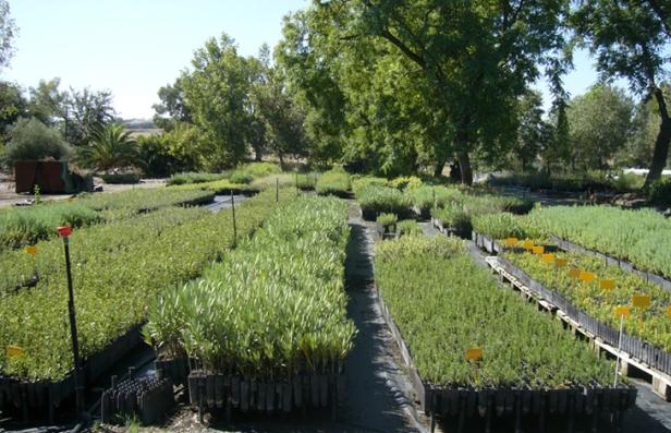 apuntes sobre viveros jardines sin fronteras ForViveros Plantas En Temuco