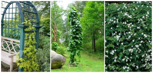 Muros verdes y jardines verticales jardines sin fronteras - Plantas para jardines verticales ...