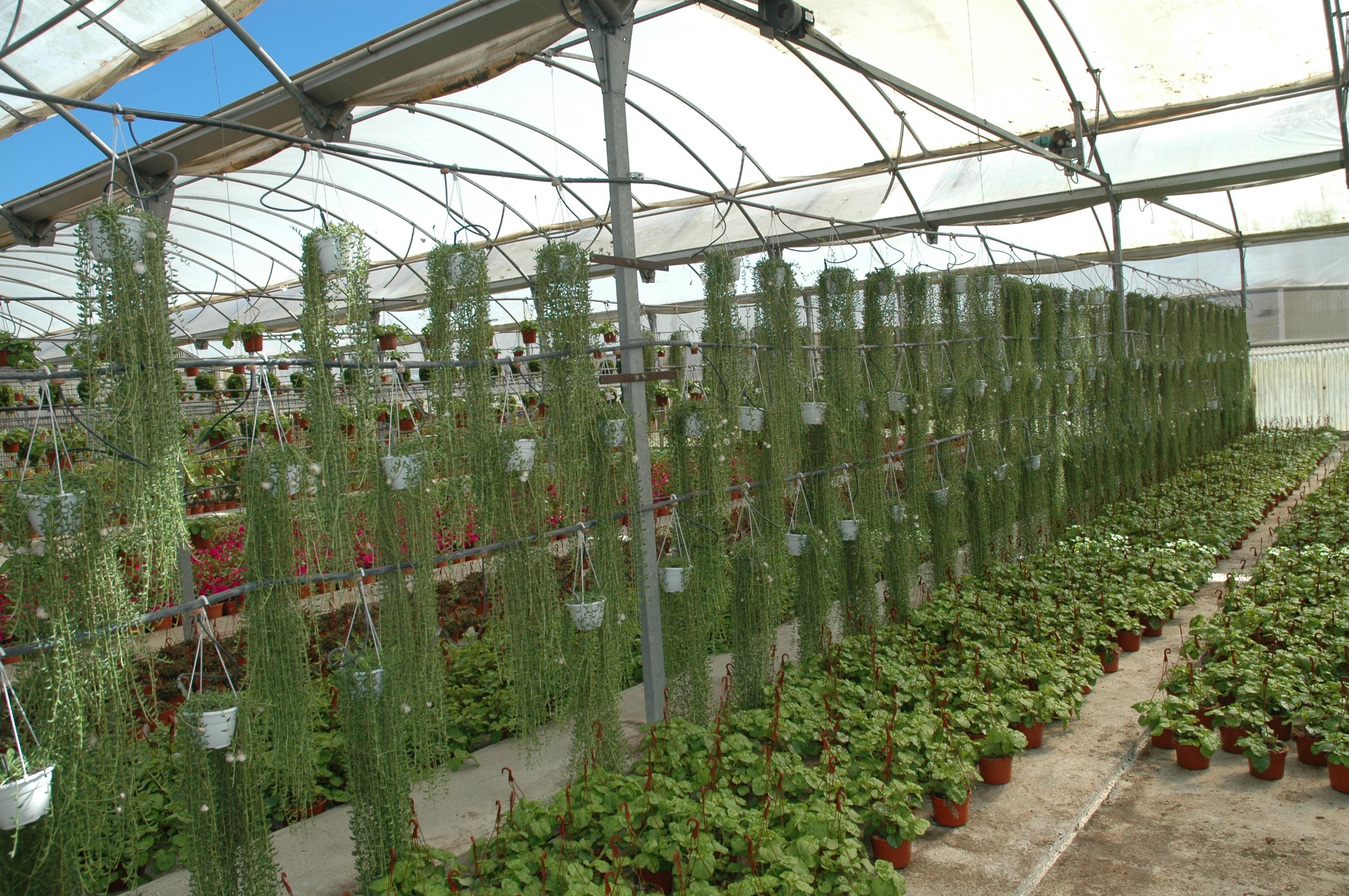 Vivero rosa del norte produccin de especies de rboles y for Viveros madrid norte