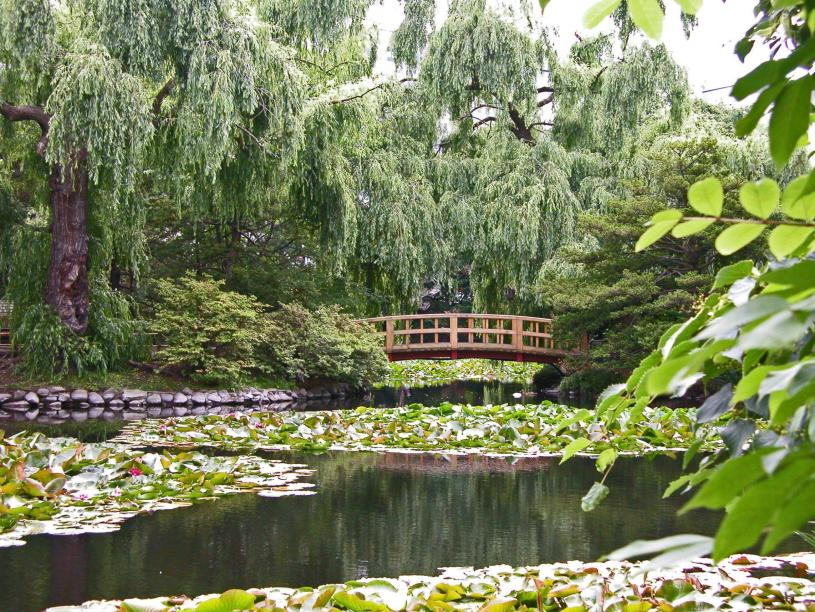 Un vivero de plantas acu ticas jardines sin fronteras for Viveros y jardines