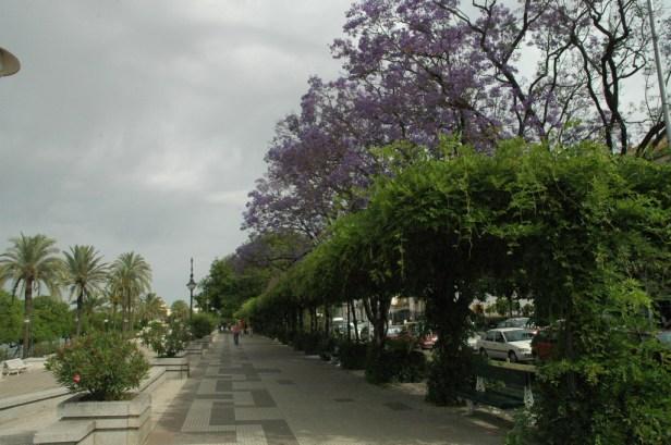 Sevilla.-Jacarandas 004_redimensionar
