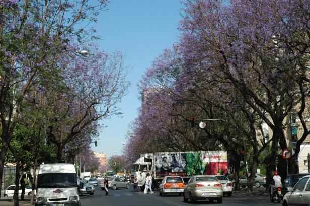 Sevilla.-Jacarandas. Avenida Ramon y Cajal