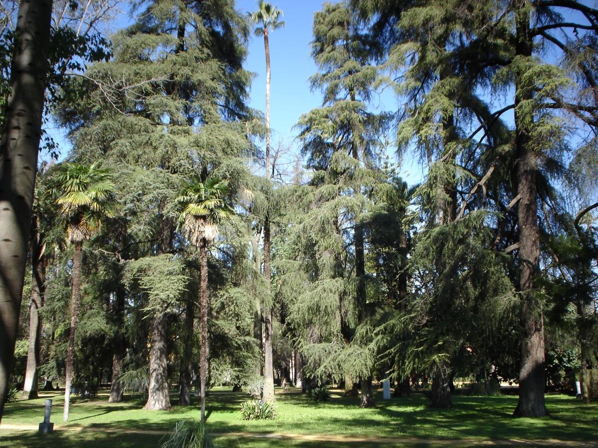TREE WORKERS EN LOS JARDINES DE LOS REALES ALCÁZARES