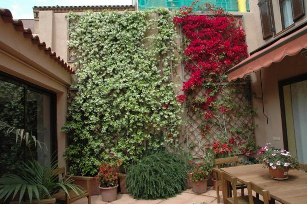 Enredaderas Y Arbustos De Pared Para Sombra En Climas Frios Jardines Sin Fronteras
