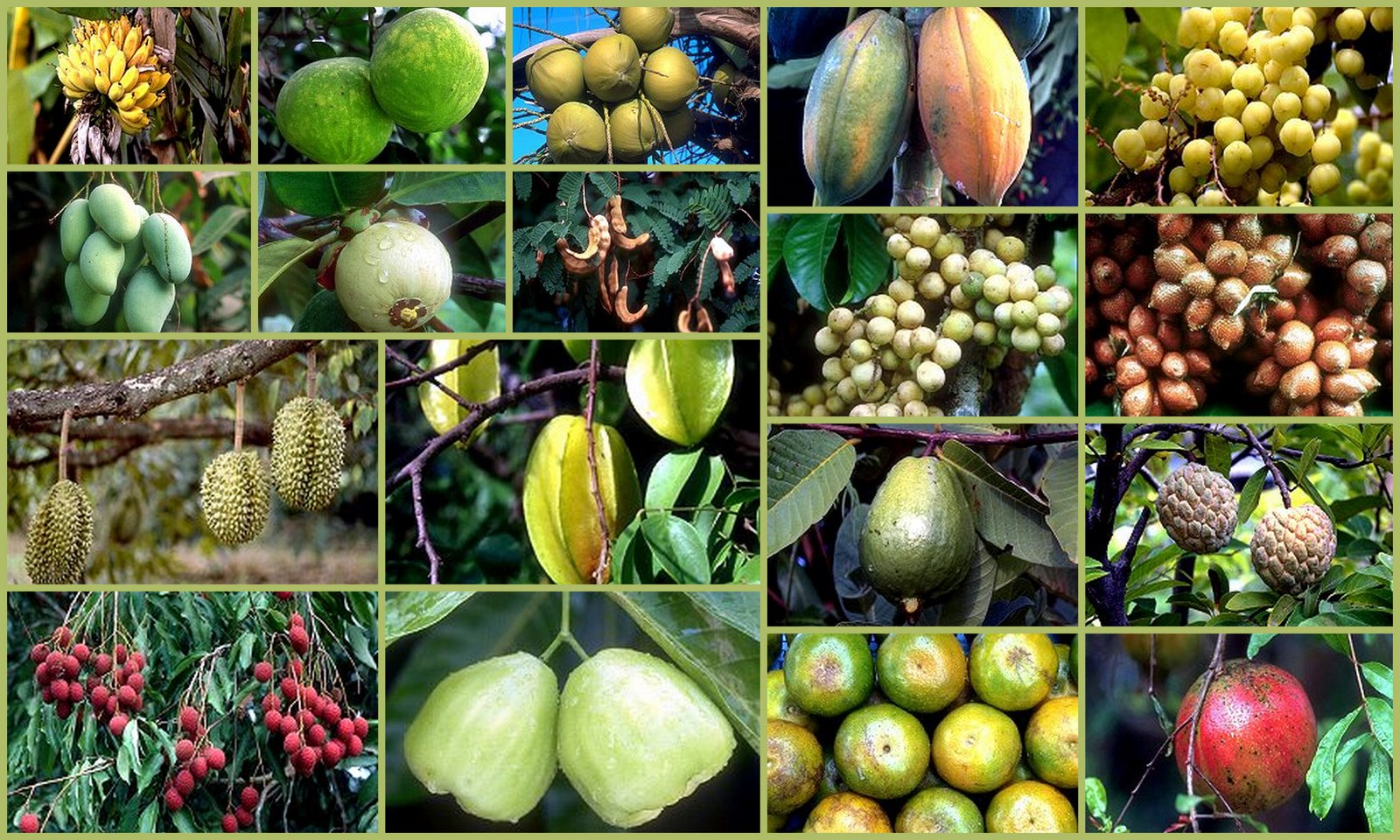 Exotic Fruits Thailandia y Malasia.jpg
