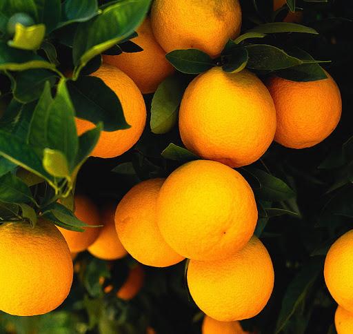 Naranjos.-v