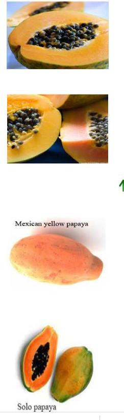 Papaya vars