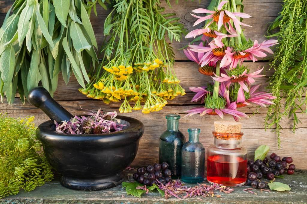 HISTORIA DEL USO DE LAS PLANTAS MEDICINALES – Jardines sin fronteras