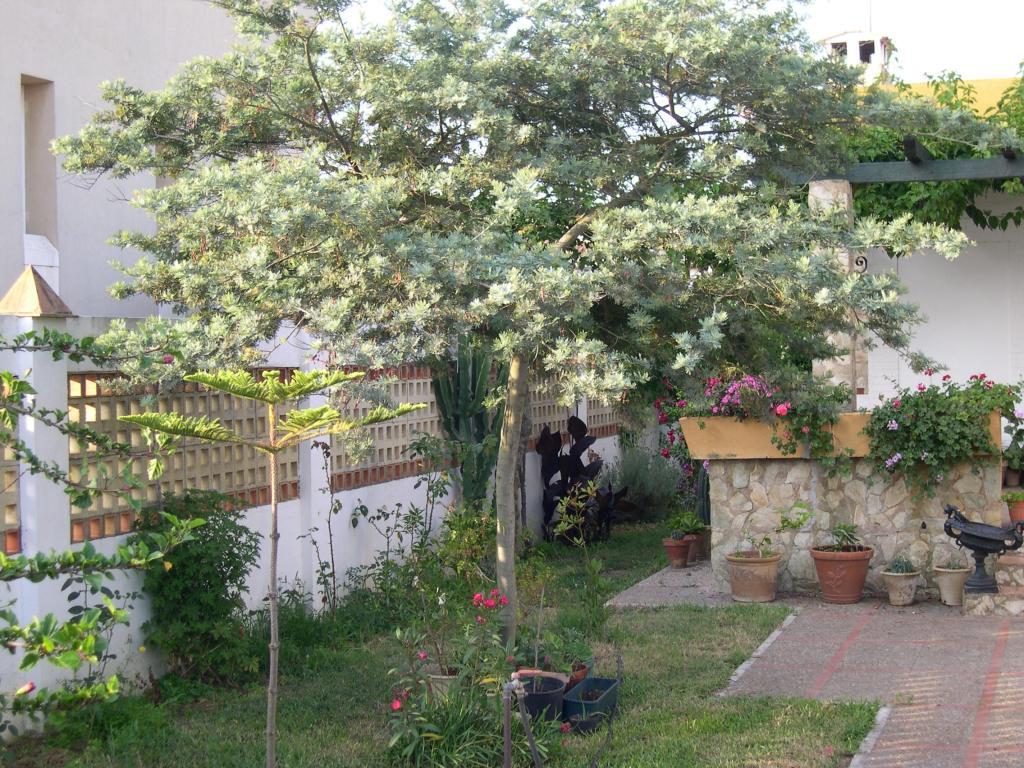 La imagen tiene un atributo ALT vacío; su nombre de archivo es acacia-hibrida-007-1.jpg